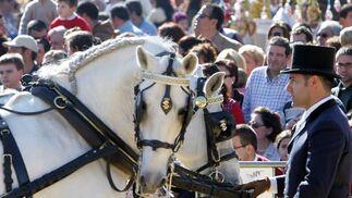 Domingo de primavera para San Antón