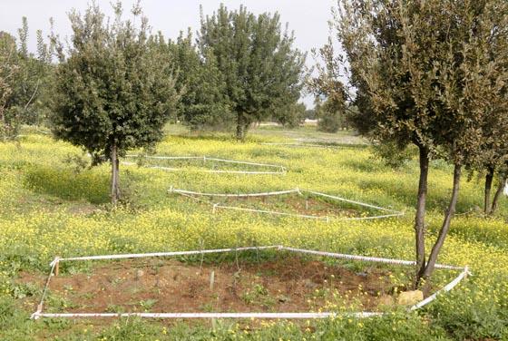 Especies mediterráneas junto a plantaciones de arbustos y setos.  Foto: Victoria Hidalgo