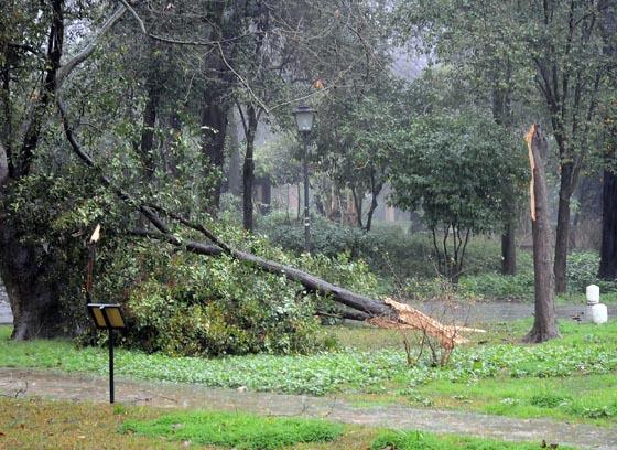 Un árbol caído en el Parque de María Luisa.  Foto: Juan Carlos Vázquez