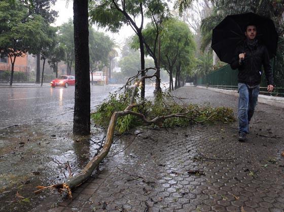Ramas en la Avenida de María Luisa.  Foto: Juan Carlos Vázquez