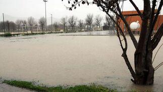 Un árbol cubierto de agua junto al recinto en el que no se pudo disputar el Triana-Calatrava.  Foto: Juan Carlos Vázquez