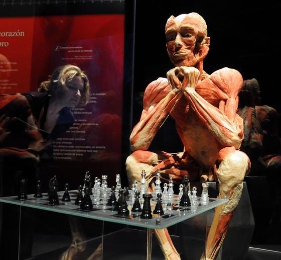 La exposición 'Body Worlds' reúne una colección de unos 200 cuerpos humanos auténticos.  Foto: Juan Carlos Vazquez