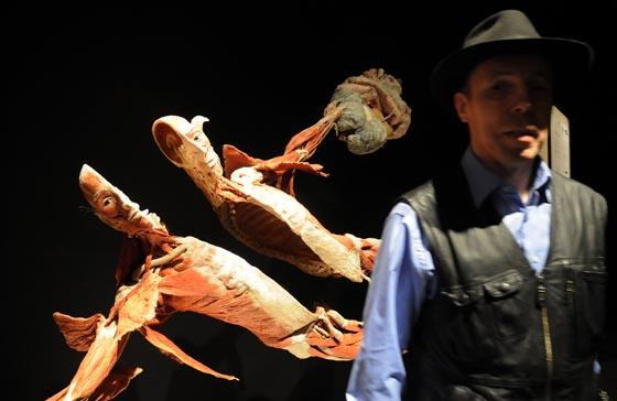 La exposición podrá visitarse desde el 6 de febrero al 5 de mayo en el Casino de la Exposición.  Foto: Juan Carlos Vazquez