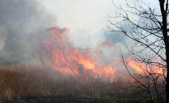 Imagen de una de las zonas donde el fuego ha sido más intenso.  Foto: B. Vargas