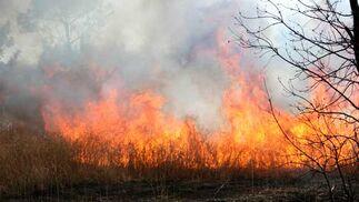 Una intensa columna de fuego y humo.  Foto: B. Vargas