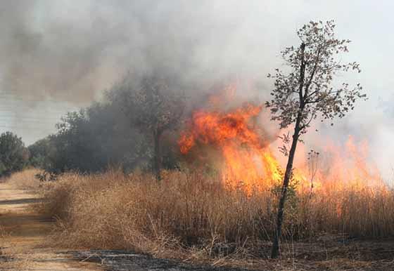 La llamas arrasan el pasto en el descampado junto a Su Eminencia.  Foto: B. Vargas
