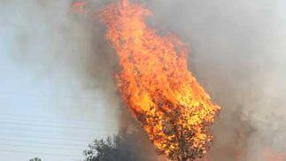 Un pequeño árbol incendiado.  Foto: B. Vargas
