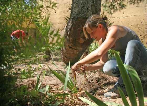 Los jardineros proceden a quitar las malas hierbas existentes.  Foto: Belén Vargas