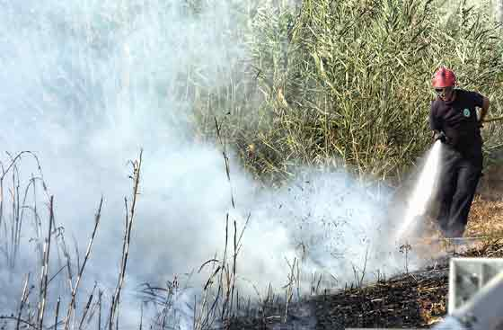 El fuego se originó en el kilómetro 8 de la carretera A-8058, en el término municipal de Gelves.  Foto: Manuel Gómez, EFE