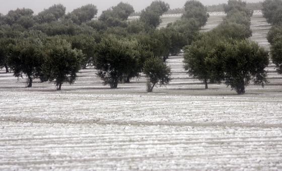 Gerena nevado.  Foto: Juan Carlos Muñoz, Manuel Gómez, Antonio Pizarro