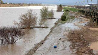 El río, a la altura de La Cartuja  Foto: Manuel Gómez
