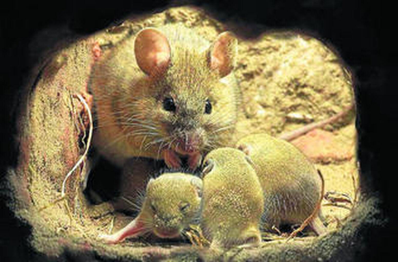 La Fauna Iberica En Alta Definicion