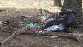 Bolsas de basuras se acumulan, apolladas a los pies de los troncos de las palmeras.  Foto: Paco Guerrero