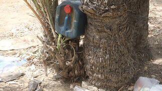Imagen de una garrafa, vacía, depositada en el hueco generado entre dos palmeras.  Foto: Paco Guerrero
