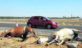 Resultado de imagen de accidente de trafico con un caballo