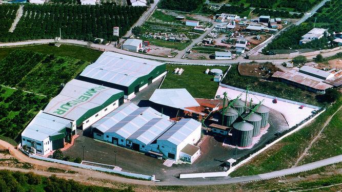El almendro, cultivo de futuroLa producción española se duplicará en tres años
