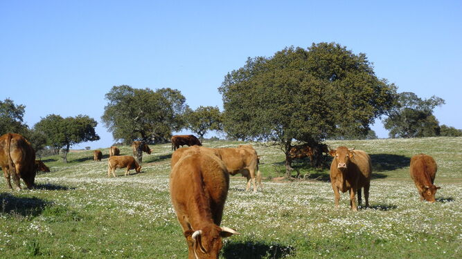 La situación actual de la tuberculosis bovina es uno de los temas que más preocupan a la Federación Andaluza de Agrupaciones de Defensa Sanitaria Ganaderas.