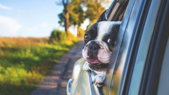 Si no podemos incluir al perro en los planes de viaje es mejor dejarlo al cuidado de expertos.