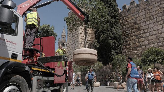 Operarios colocan un macetero junto a la entrada principal del Real Alcázar.