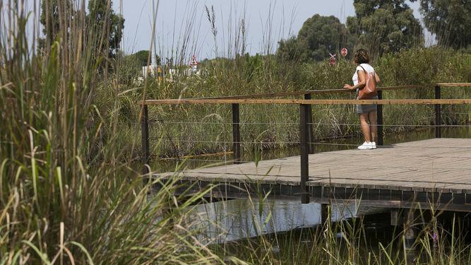 1. Una visitantes contempla la laguna de agua dulce. 2. Portada de acceso al jardín botánico. 3. El personal del jardín procede a limpiar un palmito. 4. Un ejemplar de piruétano.