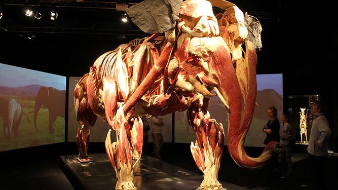 Cada cuerpo está preservado por el proceso de la plastinación.