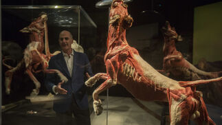 La exposición 'Animal Inside Out', en Sevilla