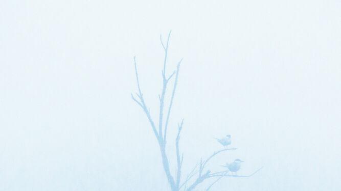 'Pose en la niebla', de Manuel Enrique González Carmona.