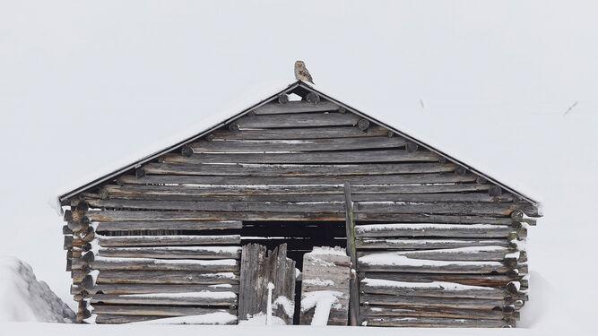 'Ural owls vautaghe point', de Markus Varesvuo.