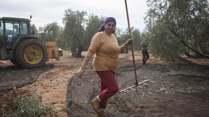 Dudea Laura, rumana, rastrillo en mano en un olivar de la carretera entre Pedrera y el Martín de la Jara.