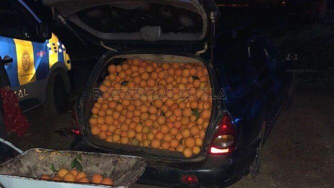 El maletero de un vehículo lleno de naranjas