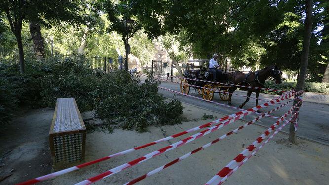 Árboles en el suelo en el Parque de María Luisa