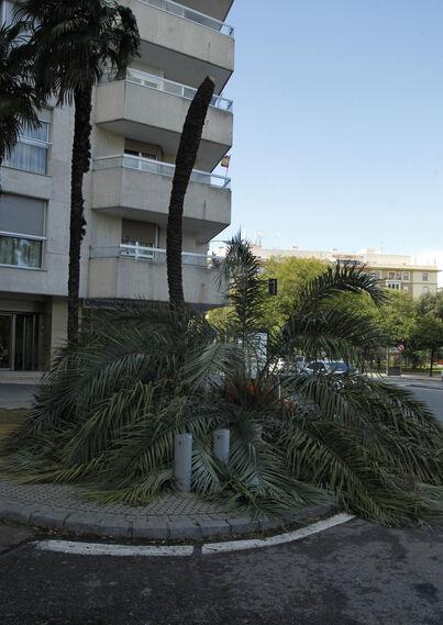 Las imágenes de los daños del viento en Sevilla