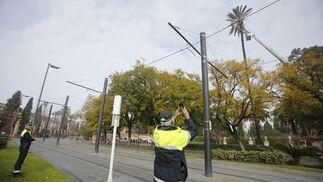 Cortan una palmera en la calle San Fernando por riesgo de caída