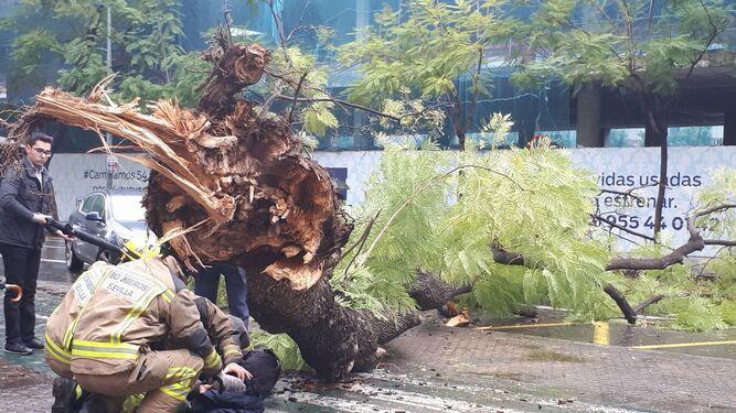 Momento de retirada del árbol, con la víctima en el suelo.