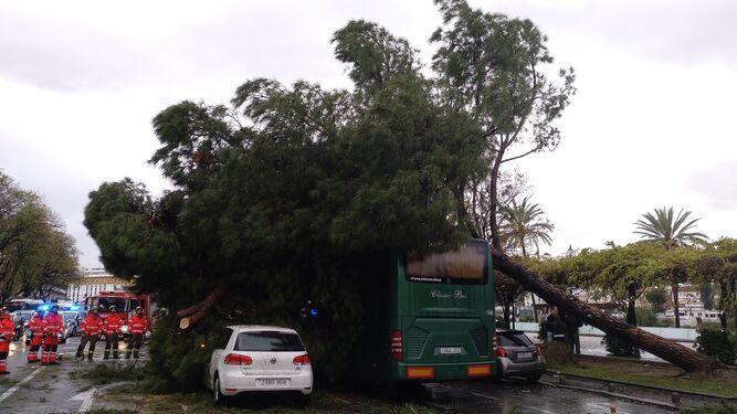 Vista trasera del árbol caído, con el autobús sosteniéndolo en parte.