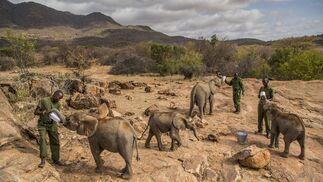 Un grupo de trabajadores alimentando elefantes bebés en el Santuario Reteti Elephant, en el norte de Kenia, el 11 de febrero de 2017. Imagen de Ami Vitale, ganadora del primer premio de la categoría 'Nature - Stories'.