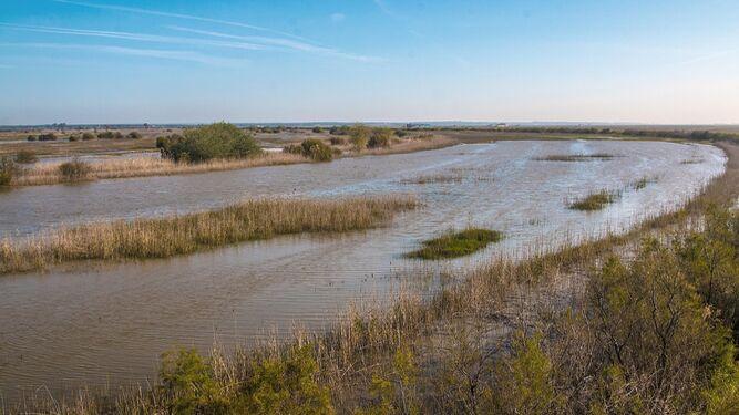 Vista actual del tramo final del río Guadiamar, en la zona de Entremuros.