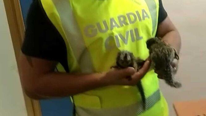 Un agente de la Guardia Civil con los monos recuperados.