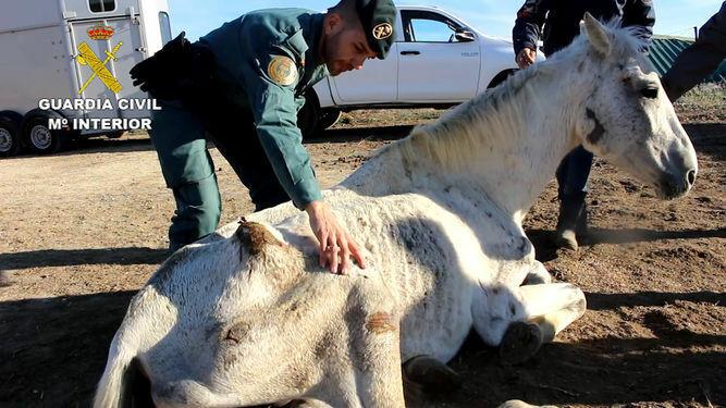 Maltrato animal Seis meses de cárcel por asfixiar a su yegua con ...