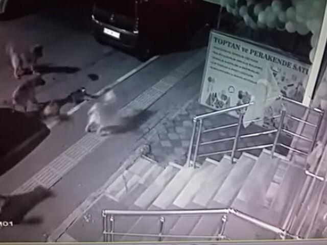 Un gato sale victorioso en una pelea callejera con varios perros