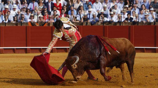 Perera torea con la muleta durante la undécima corrida.