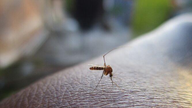 Productos 20€ Menos Antimosquitos Mejores De Los Por PX0wN8Onk