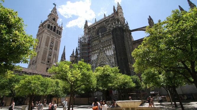 Sevilla diagnostica por primera vez el estado de sus 235.000 árboles