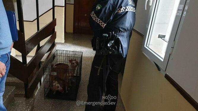 Rescatados una treintena de animales que vivían hacinados en una vivienda en Sevilla