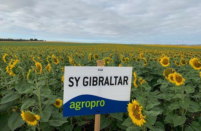 Campo de cultivo donde se ensaya con la variedad 'gibraltar', gestionada en exclusiva por Agropro