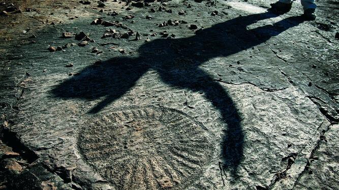 Detalle del yacimiento de fósiles de Constantina, datado en mas de 550 millones de años de antigüedad.