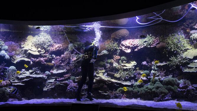 Uno de los estanques del Acuario en el que se puede contemplar la flora y fauna marina.