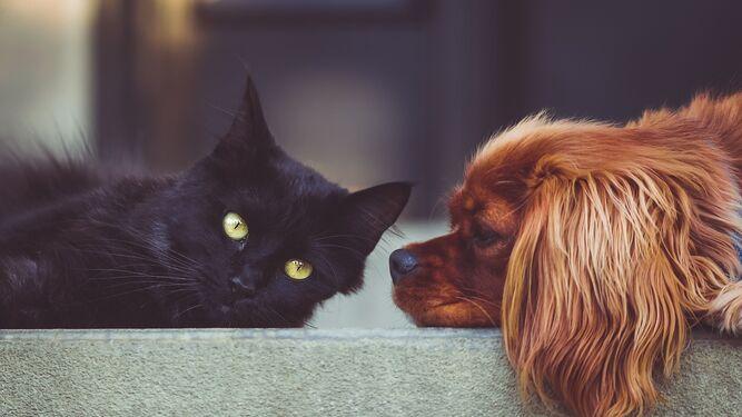 Ranking de las mascotas más populares en España