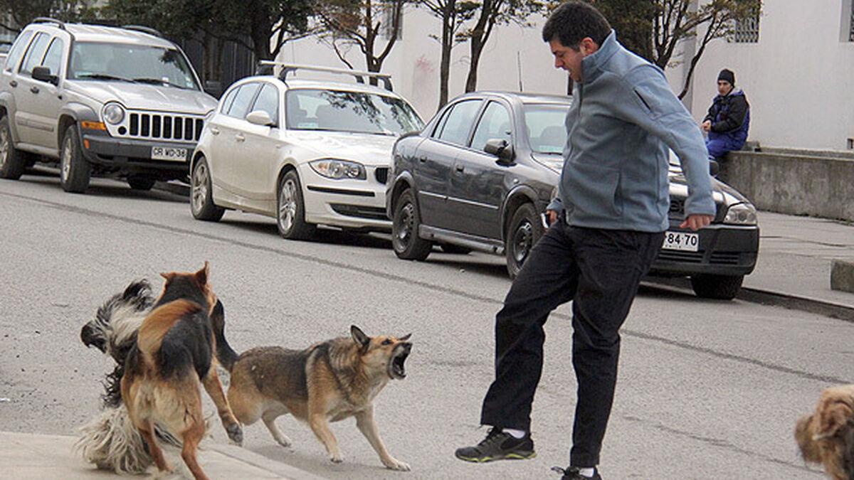 Detenido el dueño de cuatro perros que atacaron a varias personas