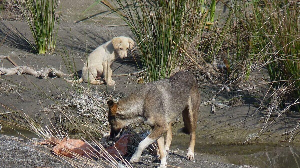 El dueño de un perro atropellado es condenado a pagar 1.992 euros